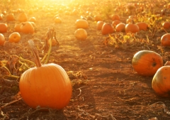 Pumpkins:  healthy, not scary!